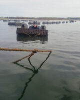 Oyster Cage Scuba Divers