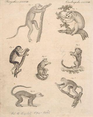 """Friedrich Justin Bertuch,neun Darstellungen aus """"Bilderbuch für Kinder"""". 1790-18"""