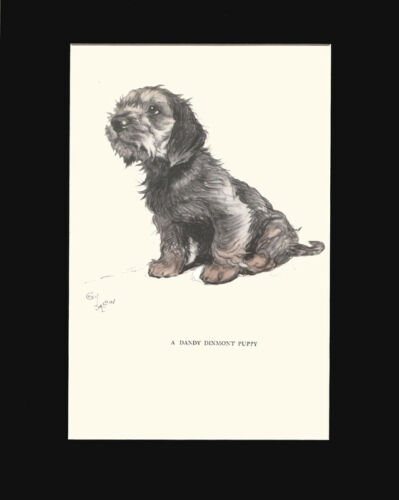 Dandy Dinmont Terrier Puppy Dog by Cecil Aldin 1930 Lithograph Print 9x12 Mat