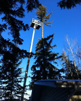 Tree pruning and disease control.