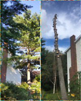 Tree Removal & Pruning Service  (Fully Insured)