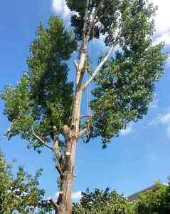 Lumbersmith Tree Removal Services Inc  Cambridge Kitchener Area image 7