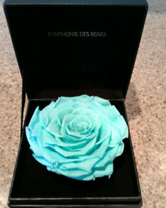 Tiffany Blue Preserved Rose