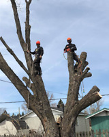 40% TREE REMOVAL SERVICE...CALL 705 255 7047