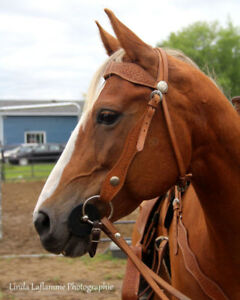 Bella - Pleasure/ Trail Horse