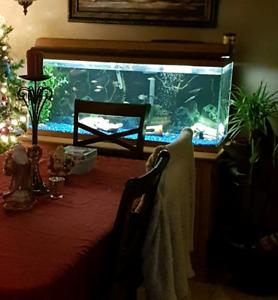 50 gallon fish tank. Everything included