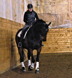 Dressage and Pleasure Horses for lease