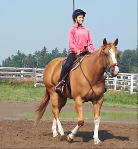 Gorgeous Quiet Mare for Light Riding