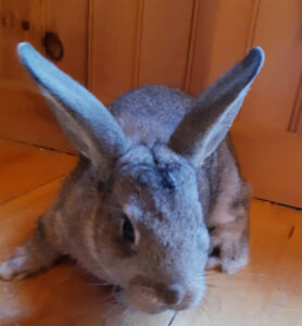 Young rabbits for sale.
