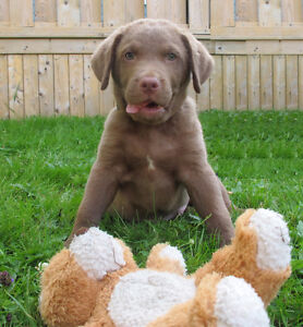 Red Dog Training - Puppy Classes