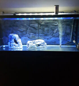 Selling full 130 gallon set up