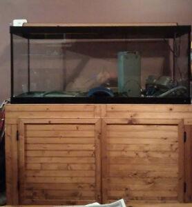 Aquarium 75 gallon and Stand $360