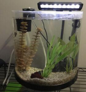Aquarium 3 gallons tout équipé