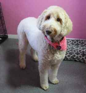 SATURDAY PET GROOMING appts available London Ontario image 9