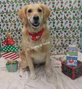 January Special ! Professional dog and cat grooming  Cambridge Kitchener Area image 5