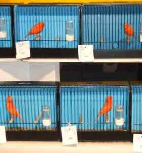 red factor or any color bred canary show cages