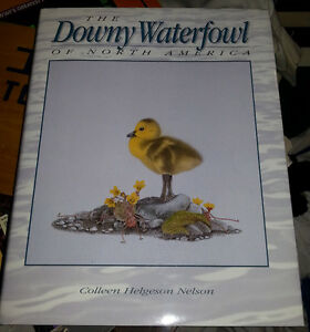 The Downy Waterfowl of North America Bird Book