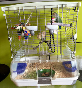 Belle petite inséparable avec cage