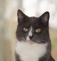 healthy adult female cat needs a good home
