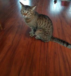 Free fixed 2yr old Male Cat