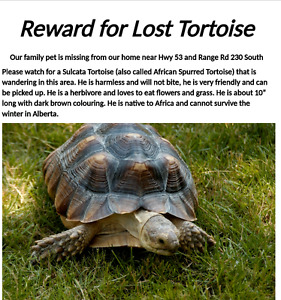 MISSING Tortoise !REWARD!