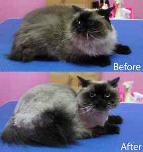 CAT GROOMING available London Ontario image 10