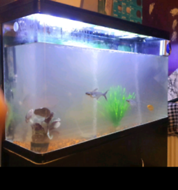 300litre Fish Tank & Cabinet with extra gifts