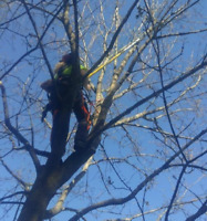 Tree Pruning & Tree Removals