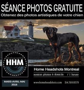 Recherche chiens modèles pour photographies artistiques