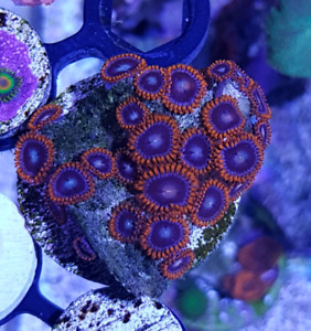 Assorted Coral Frags for sale!!