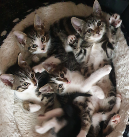 4 Kittens ready now