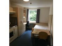 Studio in student accommodation (uni exeter only)