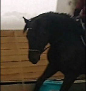 Horse wanted