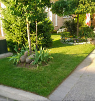 $35 Lawn Mowing - Whitby - Ajax - Pickering