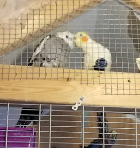 cocktails for sale $ 200 without cage with cage $ 260