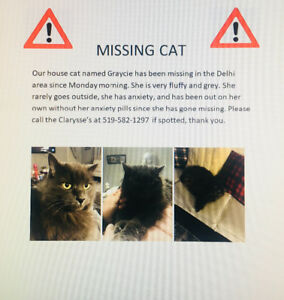 MISSING CAT in Delhi Area!