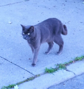 Male cat spotted in south end