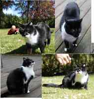 Free Very Affectionate Well Behaved 13 y/o cat