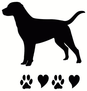 Dog walking service all breeds  , NE,NW Inner city, Airdrie