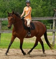 AQHA, CWHBA, Warmblood, several well bred quality horses for sal