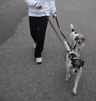 Now Hiring Dog Walker in the Thornhill & Vaughan Area