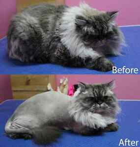 CAT GROOMING available
