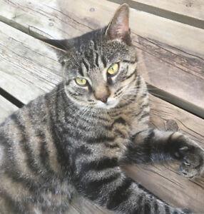 Found Cat in Meadowvale Area