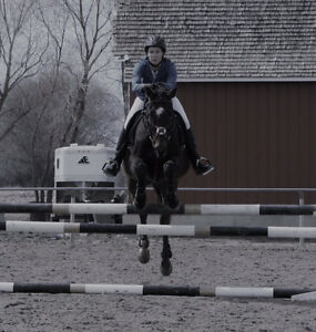 Jumping Training/Thoroughbred Training