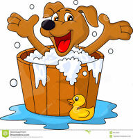 DOG WASHER REQUIRED