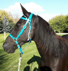 Registered Tennessee Walking horse gelding