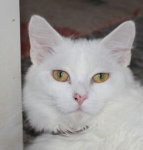 Gorgeous Haley is looking for a home