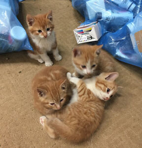 5  playful kittens