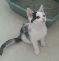 Adordable baby kittens available to good homes only!