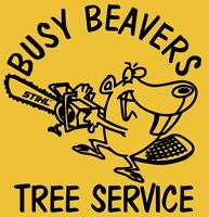 Busy Beavers - Storm Damage / Emergency Tree Services